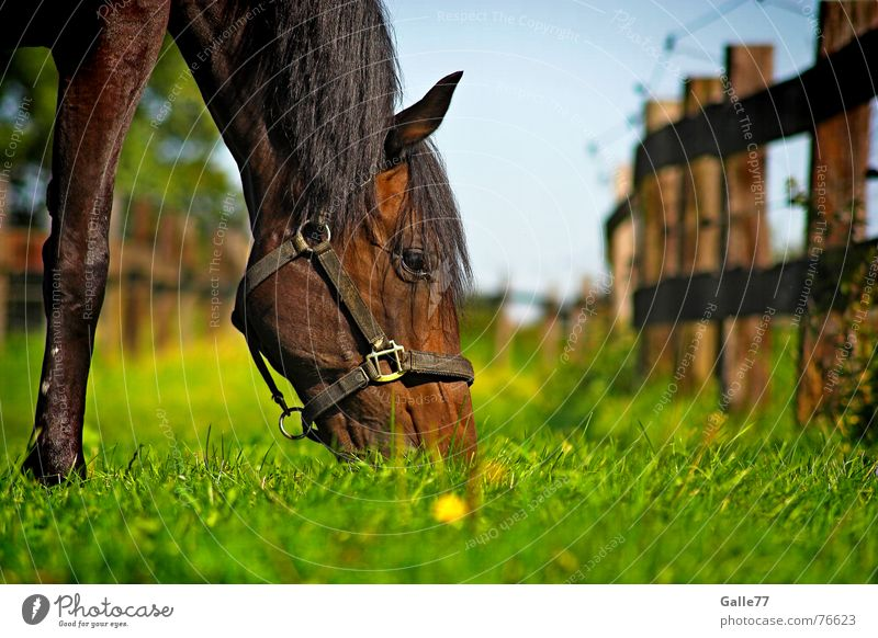 Summer Calm Meadow Nutrition Grass Food Fresh Horse Dive Delicious Pasture Appetite To enjoy To feed Juicy Sense of taste