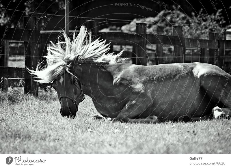 Joy Emotions Horse Wild animal Rotate Well-being Swing Mane Animal Haflinger