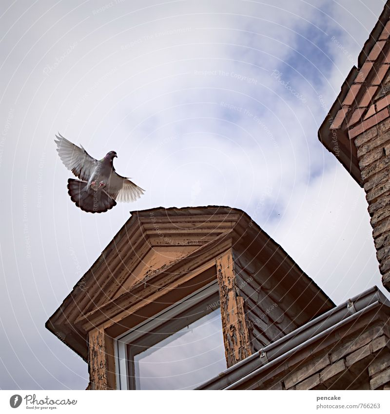 City Clouds House (Residential Structure) Animal Window Flying Bird Business Roof Retro Sign Write Past Decline Letter (Mail) Old town