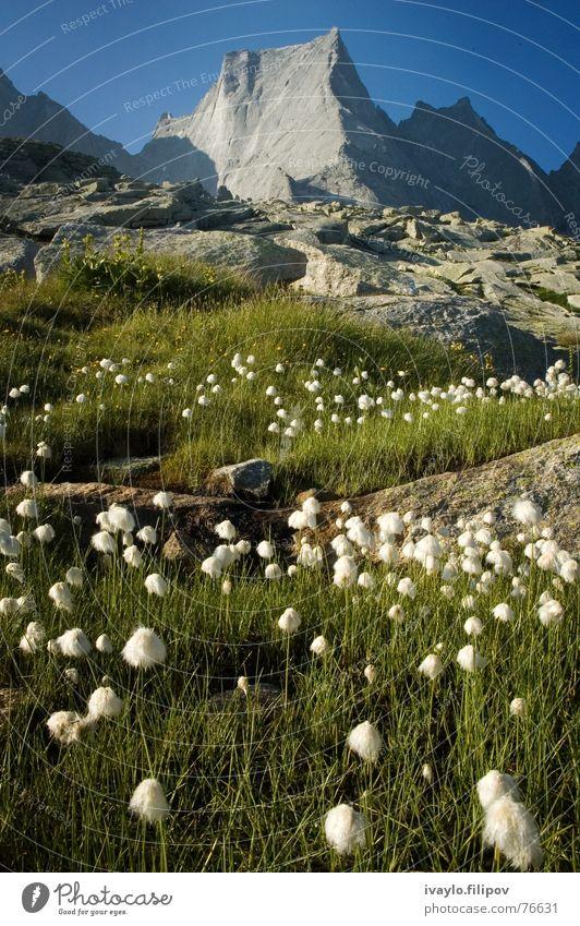 Piz Badile Top Switzerland Summer mountain peak summit alps