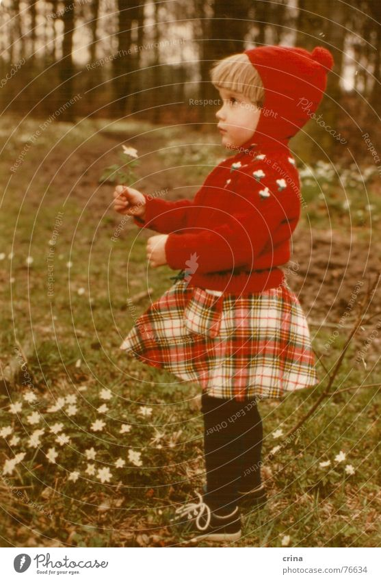 A girl stands in the woods - Version 2 Child Girl Red Forest Flower White Small Loneliness Checkered Tights Little Red Riding Hood