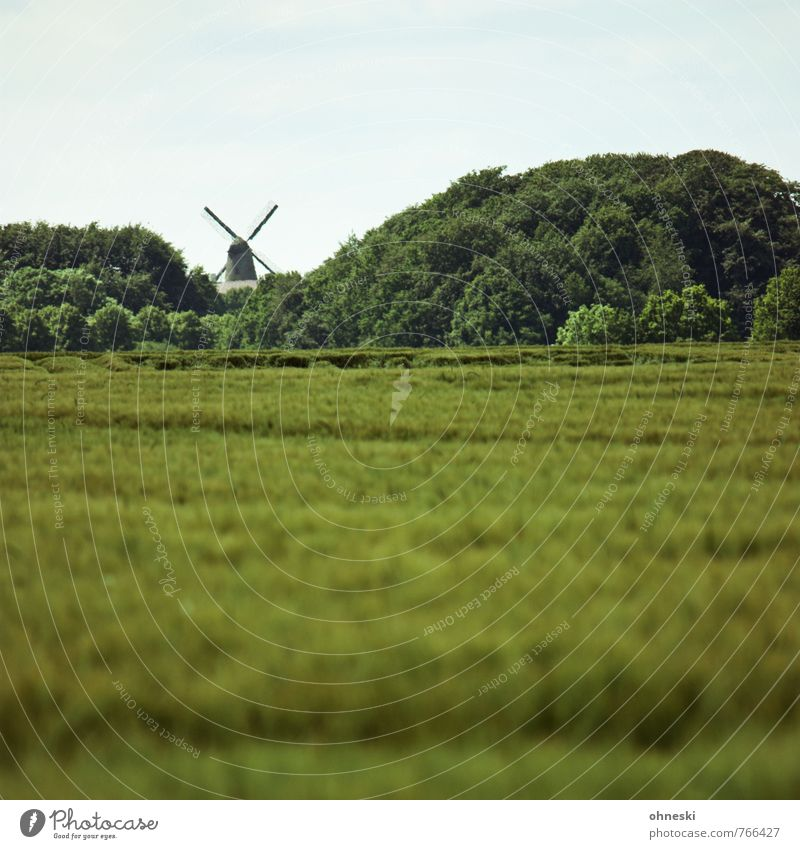 Mühlhausen Landscape Summer Tree Field Forest Mill Windmill Windmill vane Idyll Sustainability Country life Colour photo Exterior shot Deserted Copy Space top