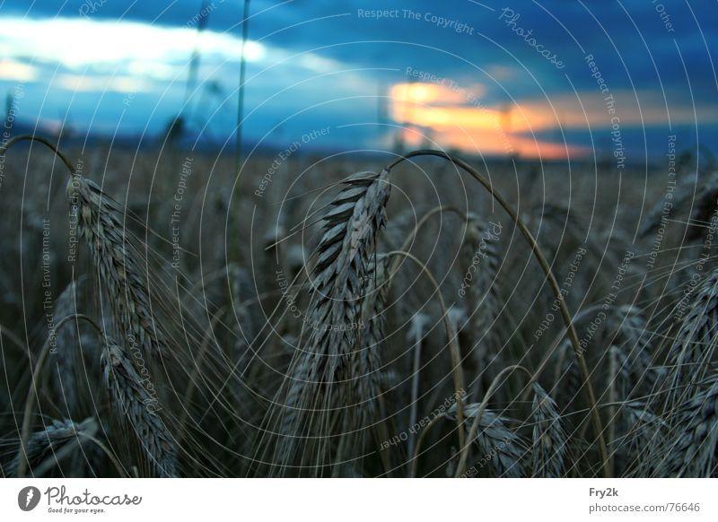 late summer Clouds Field Oats Night Dark Meadow Summer Autumn Late Twilight Sky Grain sunshine Evening Sun spreads