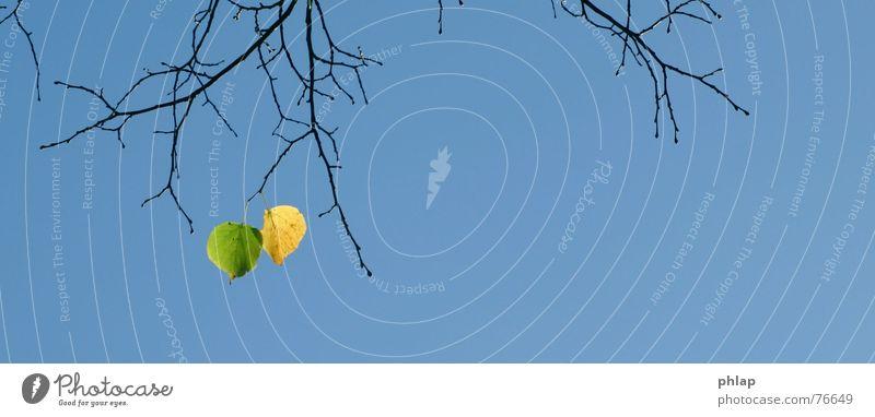 Sky Tree Green Blue Leaf Yellow Autumn 2 End Goodbye Twig Autumn leaves