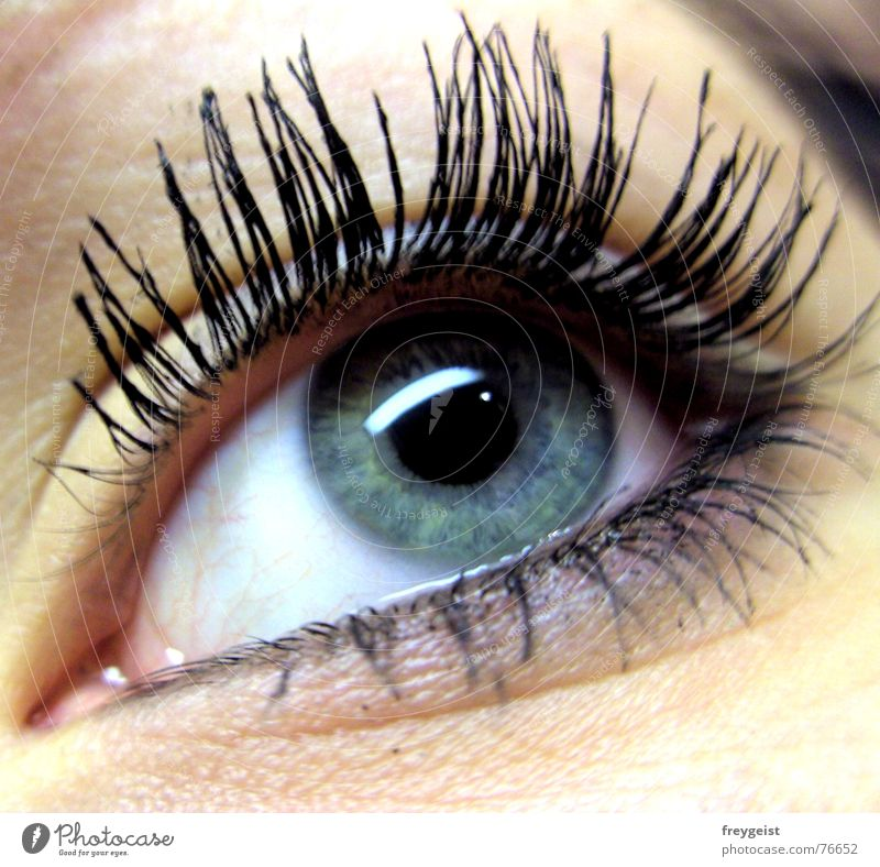 look Skin Face Woman Adults Eyes Lake Glittering Blue Gray Green Black White Eyelash Pupil Service eye lashes Iris grey view glance Pattern Looking