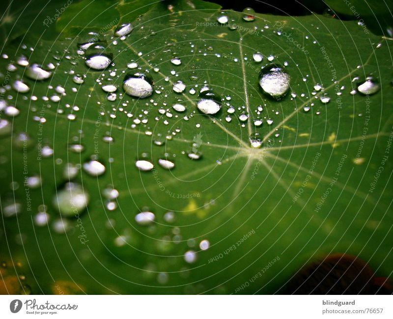 Green Water Leaf Life Garden Line Rain Glittering Fresh Drops of water Wet Star (Symbol) Near Division Silver Tears
