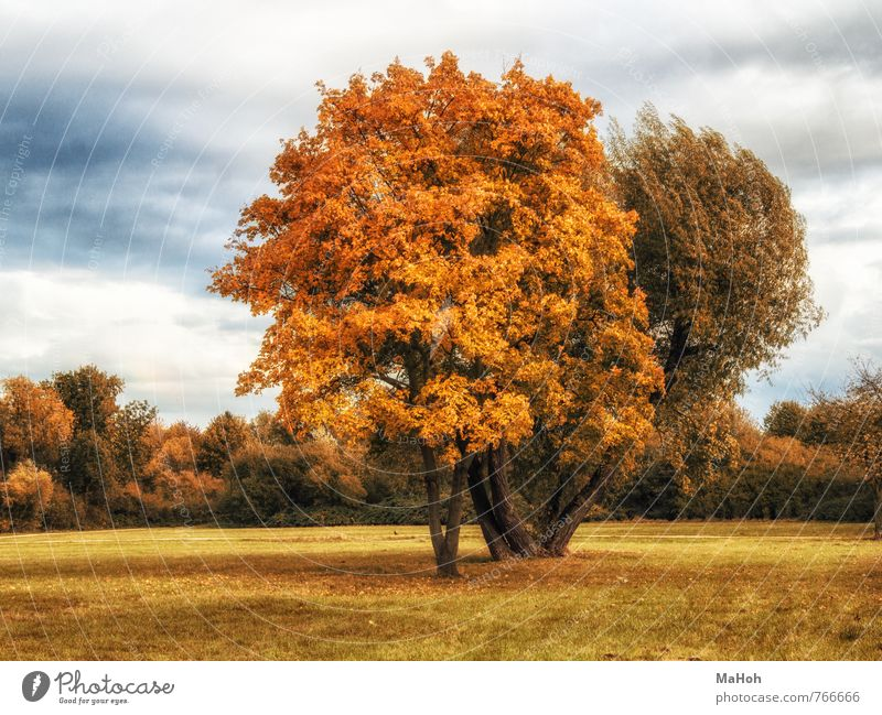 Nature Tree Relaxation Landscape Calm Far-off places Yellow Emotions Autumn Natural Healthy Brown Park Contentment Romance Senses