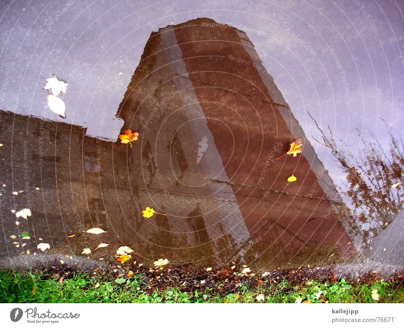 Sky Leaf House (Residential Structure) Wall (building) Autumn Lawn Puddle October Pankow