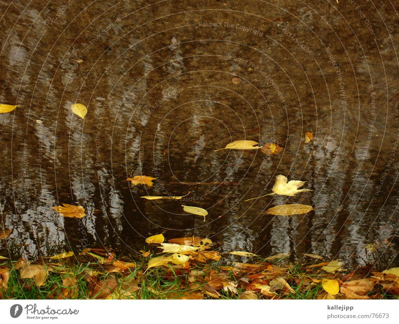 sky over berlin III Tree Puddle Autumn October Leaf Bad weather Rain image rotated 180 degrees Lawn kallejipp