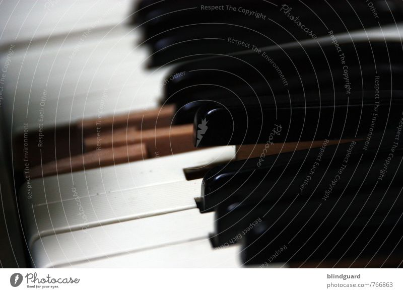White Black Senior citizen Wood Art Brown Glittering Leisure and hobbies Music Authentic Broken Plastic Stage Keyboard Piano Musician