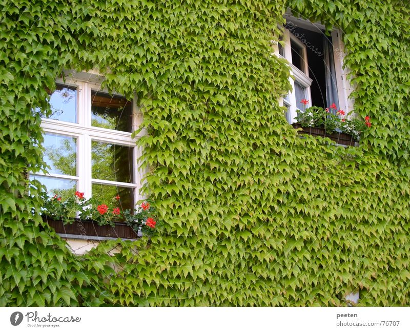 Window in the green Neuruppin Green Leaf Closed Building Narrow Quality of life Ecological Exterior shot Open Prussia fontane Plant Freedom Architecture