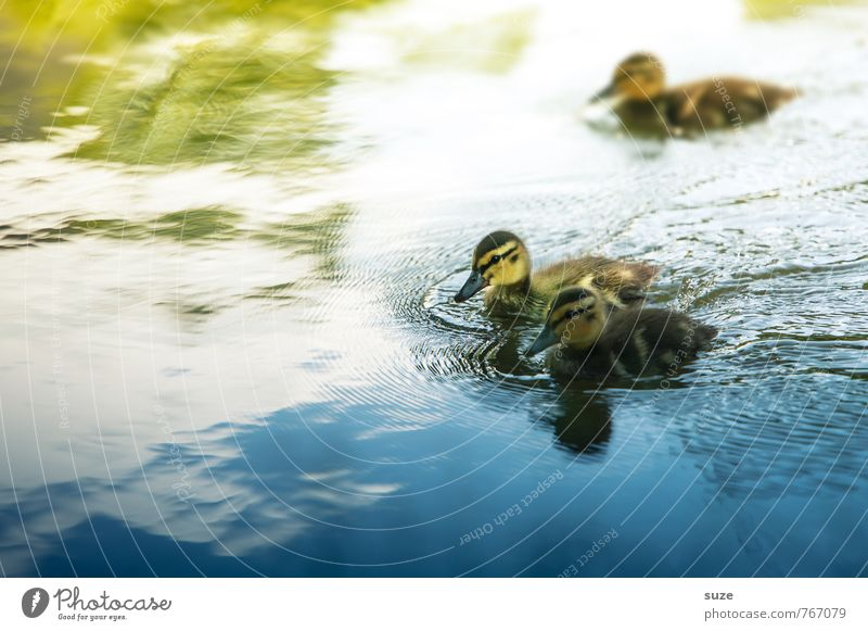 Nature Blue Green Water Animal Environment Yellow Baby animal Small Swimming & Bathing Lake Bird Weather Wild Wild animal Cute