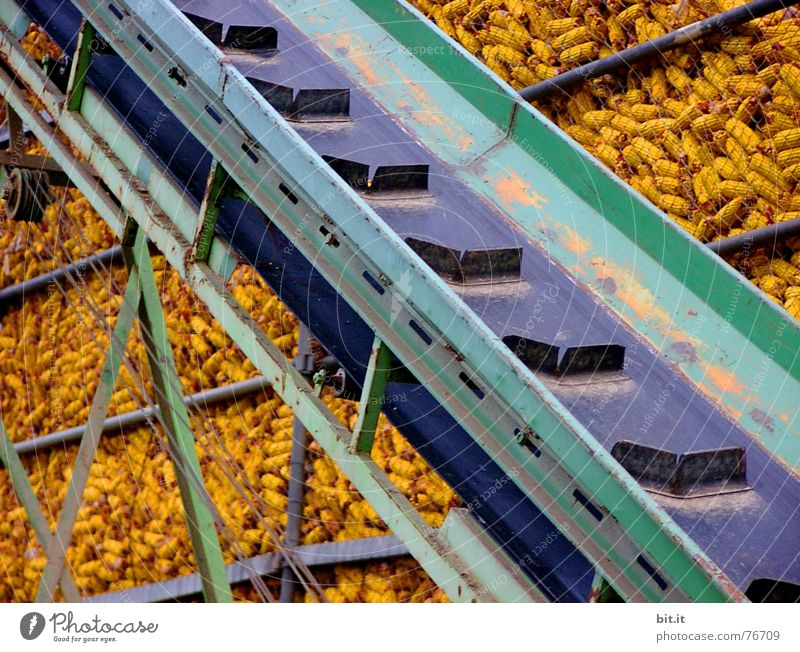 RAMPE free Corn cob Conveyor belt Maximum