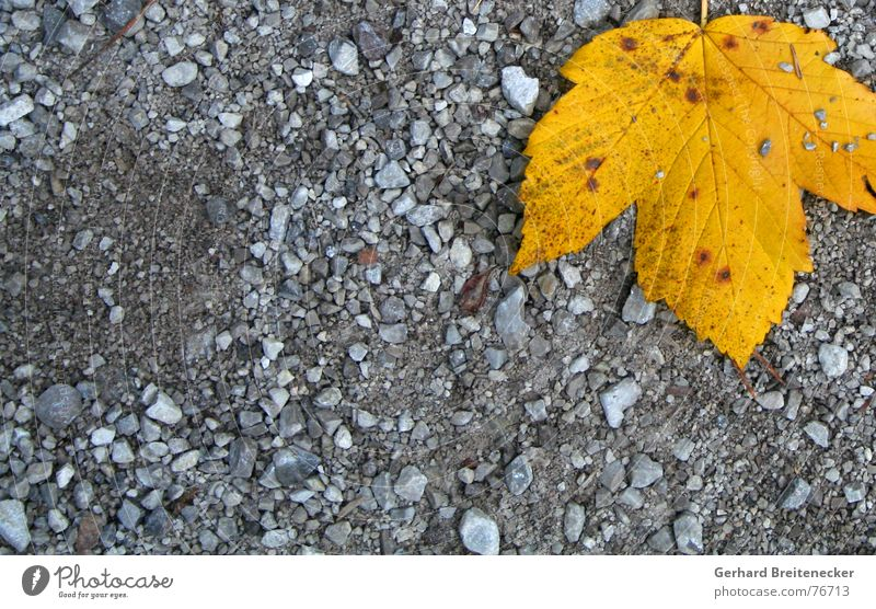 Demo against grey Leaf Autumn Yellow Winter Gray Individual Loneliness Floor covering Orange Stone To fall Lie Calm Gravel