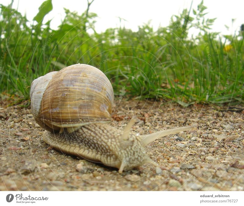 Green Calm House (Residential Structure) Animal Life Meadow Grass Stone Lanes & trails Sand Search Floor covering Serene Snail Crawl