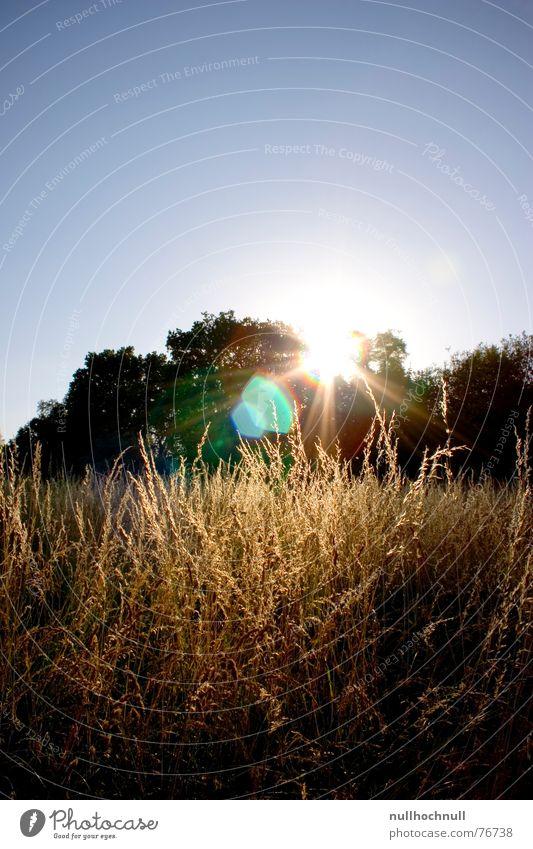 Sky Tree Sun Blue Meadow Field Beautiful weather Dusk Cornfield Lens flare