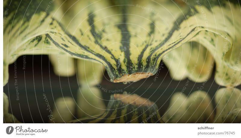 Green Plant Animal Autumn Feet Mirror Row Narrow Striped Pumpkin