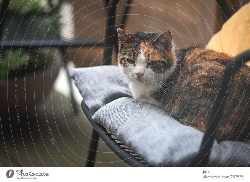 cat Chair Terrace Animal Pet Cat 1 Lie Sit Colour photo Exterior shot Deserted Day Animal portrait Forward