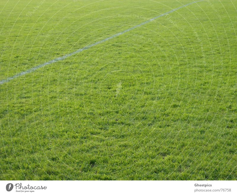 White Green Grass Line Soccer Lawn