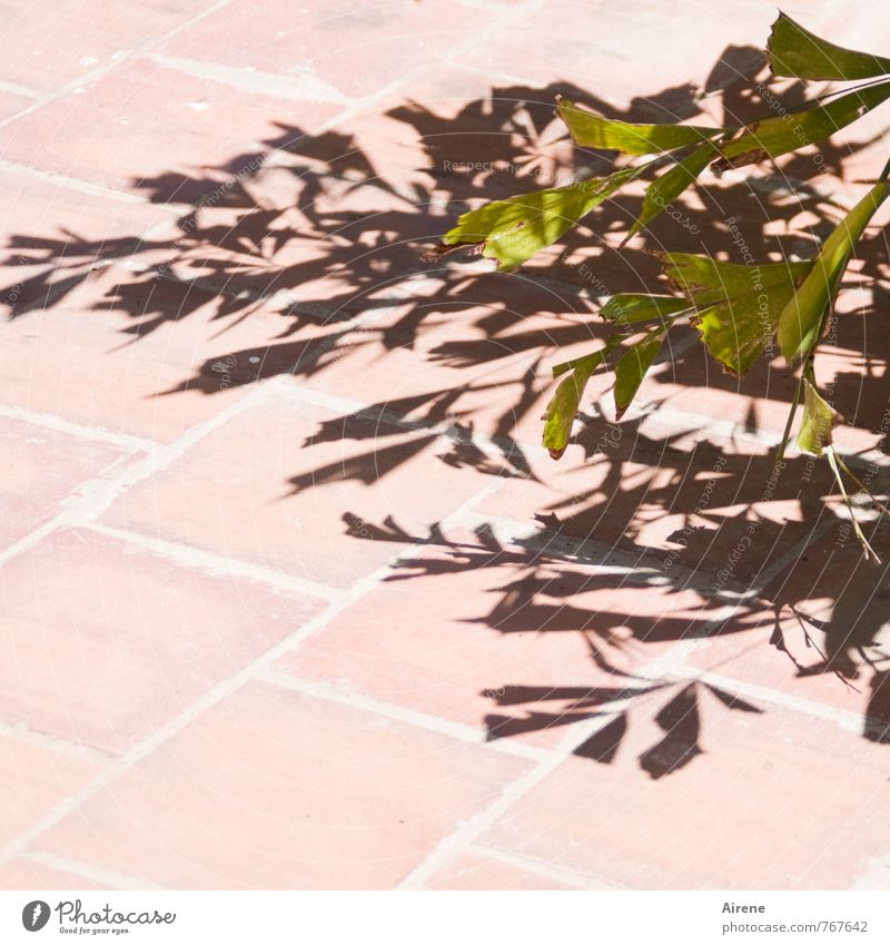 Green Plant Leaf Black Beautiful weather Sign Clarity Hot Considerable Foliage plant
