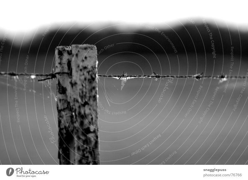 bokeh Black & white photo fence barbed wire Blur black