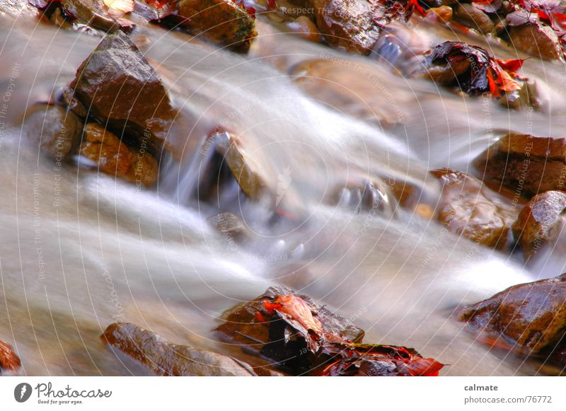 Water Leaf Cold Autumn Stone Seasons River Brook Long exposure