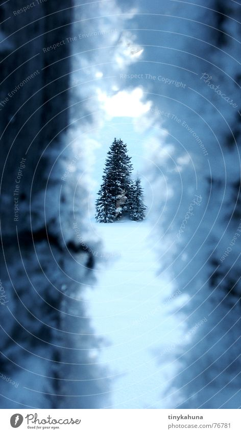 Through a crack in a dark fence. Winter Ice crystal Snow crystal Fir tree Spruce Cold White Fence Frost Crack & Rip & Tear Column Blue Deep