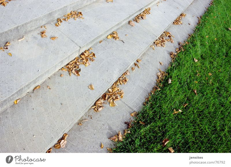 spring Grass Autumn Leaf Seasons Passion Gloomy Cold Green Gray Nature Stairs Lawn Stone carumn step leafs