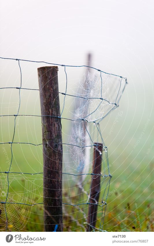 Fence in the fog Fog Meadow Green Spider's web Autumn Morning