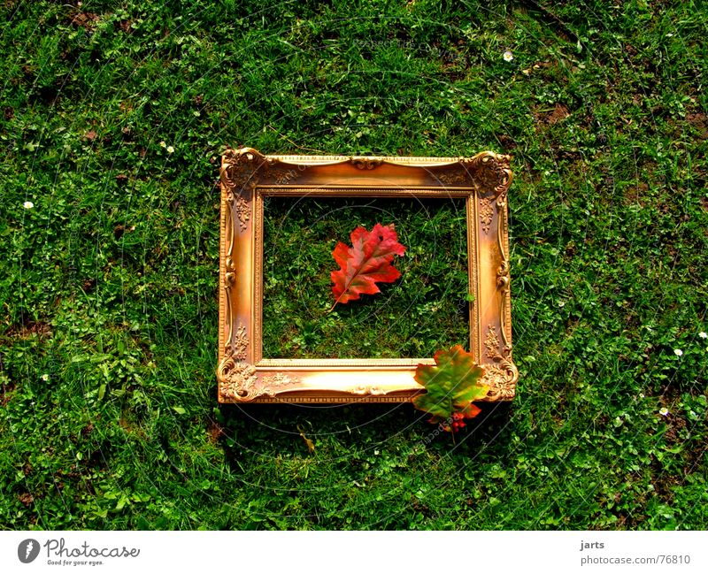 Autumn picture II Autumn leaves Leaf Picture frame Meadow Multicoloured Grass Image Frame Gold jarts