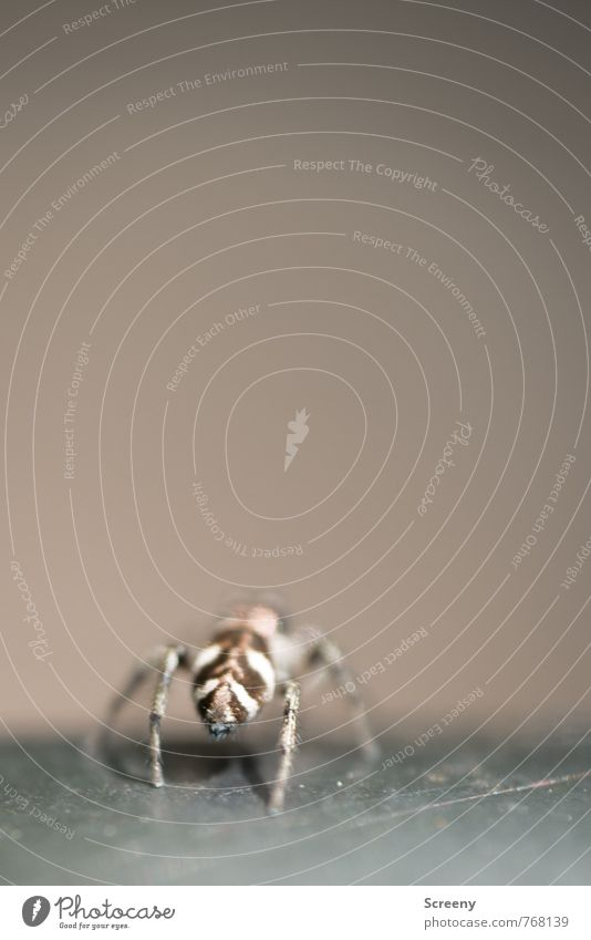 Nature White Animal Brown Legs Fear Wild animal Dangerous Back Crawl Nerviness Spider Diminutive Spider legs