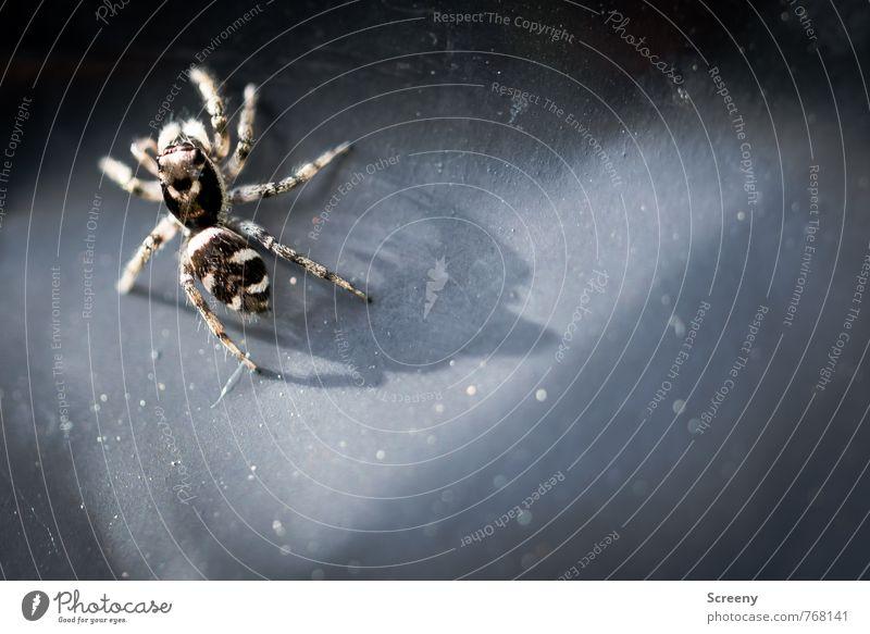 Animal Small Brown Fear Wild animal Threat Crawl Spider Diminutive Inhibition
