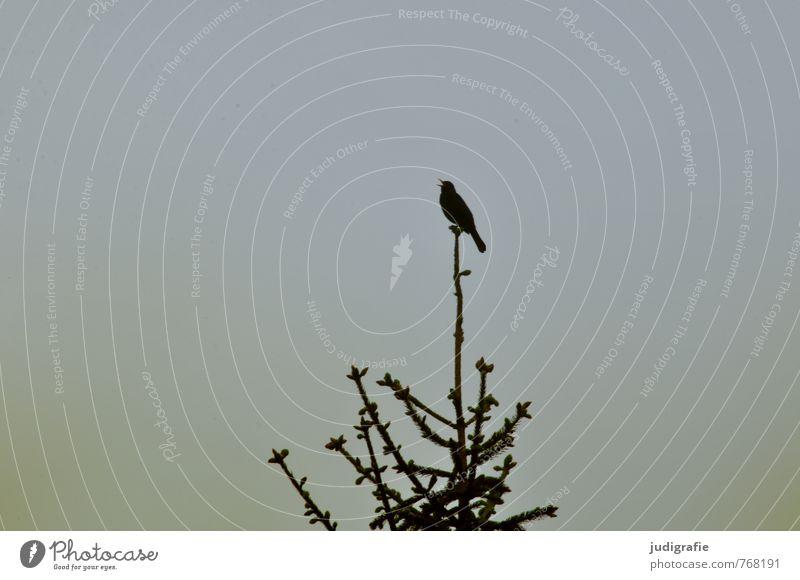 Nature Plant Tree Animal Dark Forest Environment Life Natural Garden Bird Park Wild Sing Chirping Blackbird