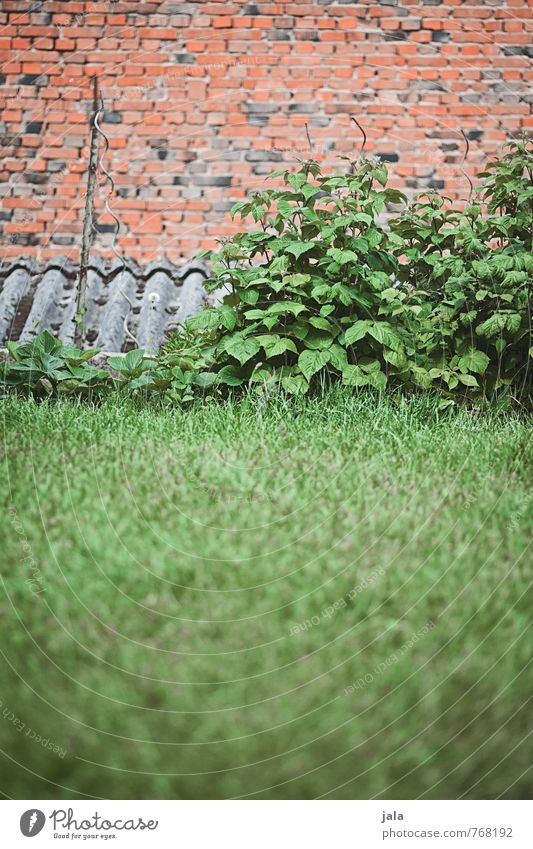 Nature Plant Grass Natural Garden Facade Bushes Roof Brick Foliage plant Agricultural crop Raspberry bush