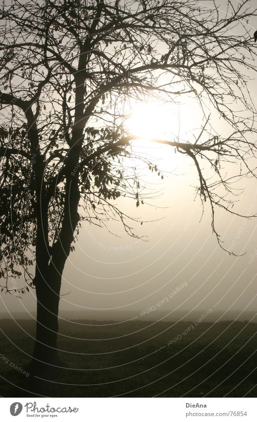 broken Fog Field Meadow Moody Tree Leaf Light October autumn morning Branch Nature Landscape Sun