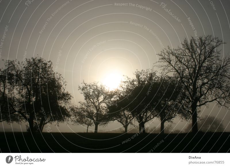 caught Fruit garden Tree Leaf Autumn Morning Fog Light Dark Gray Gloomy Nature Sun