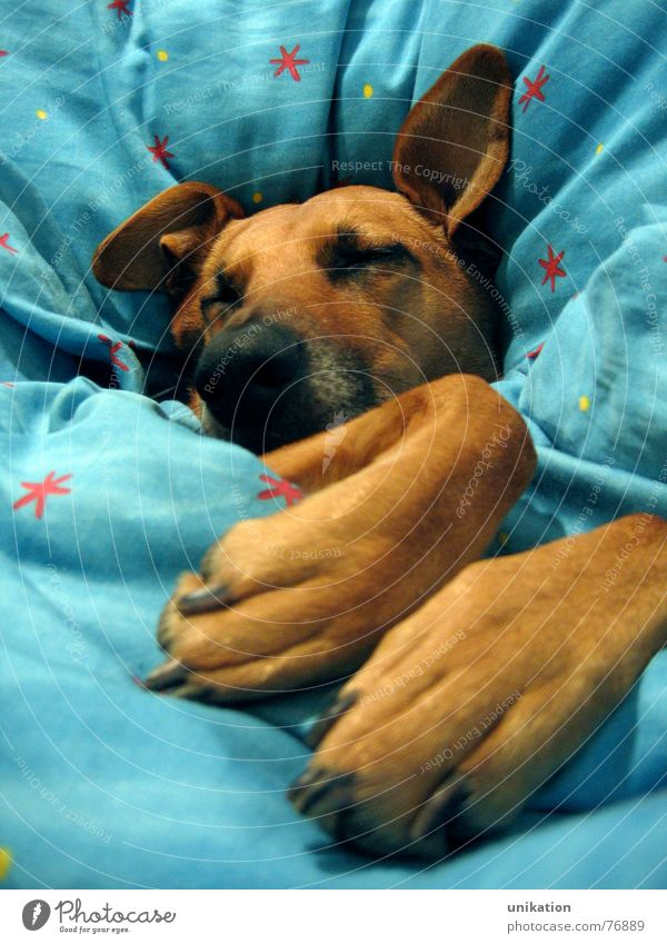 Winter Cold Dog Warmth Dream Sleep Sweet Ear Bed Cute Kitsch Physics Fatigue Freeze Cozy Blanket