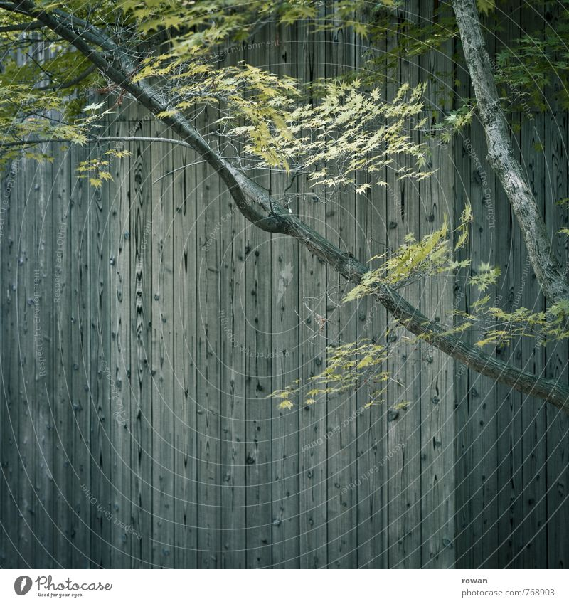 Green Tree Leaf House (Residential Structure) Wall (building) Architecture Wall (barrier) Building Gray Wood Line Facade Branch Manmade structures Twig