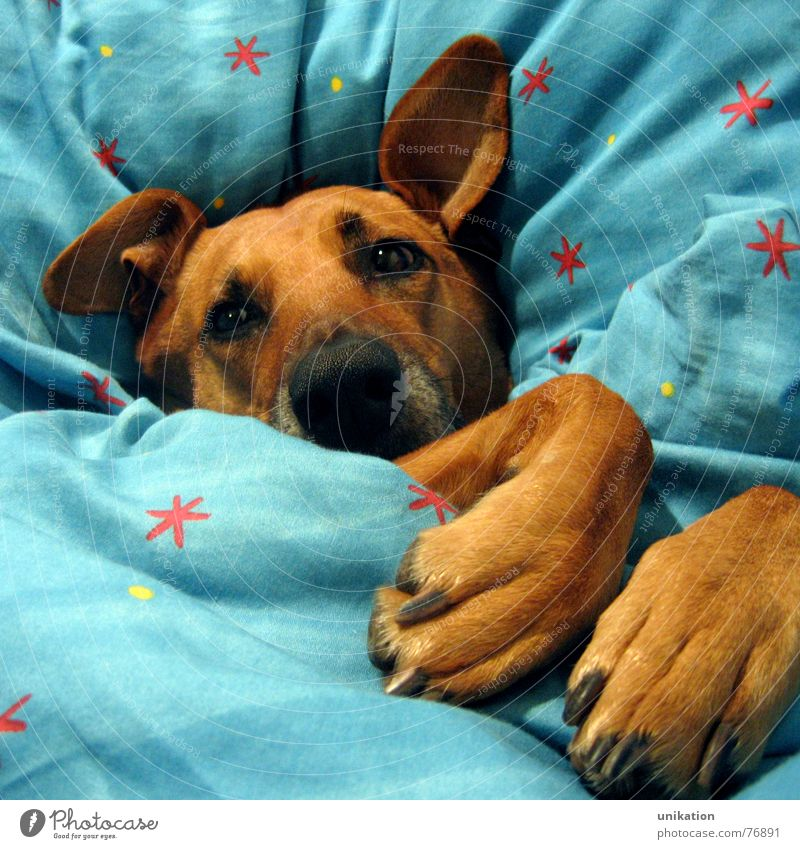 Winter Eyes Cold Dog Warmth Dream Sweet Ear Bed Cute Kitsch Physics Fatigue Freeze Cozy Blanket