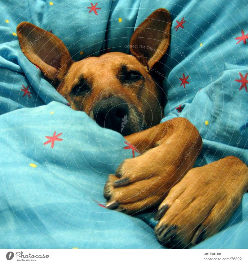 Winter Eyes Cold Dog Warmth Dream Sleep Sweet Ear Bed Cute Kitsch Physics Fatigue Freeze Cozy