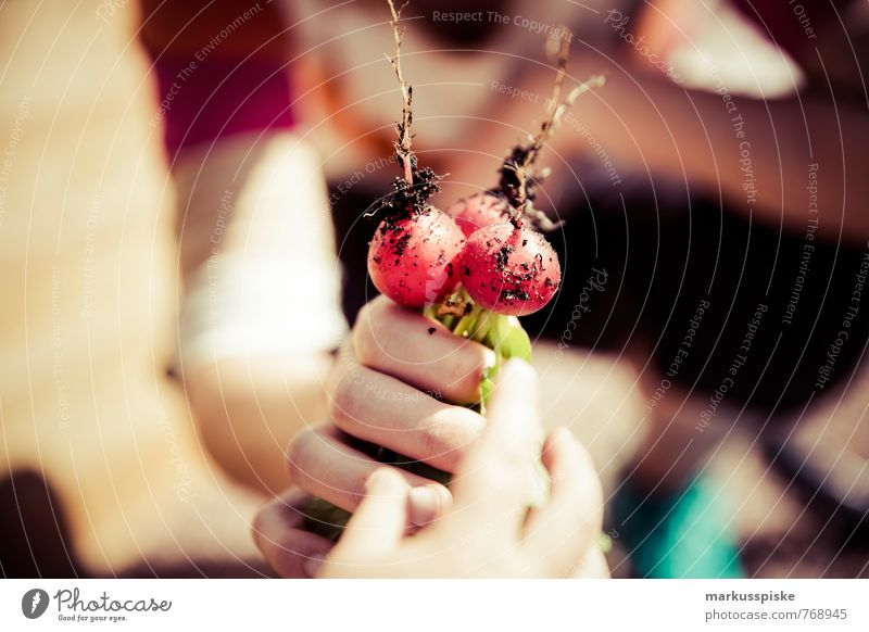 Human being Youth (Young adults) Hand 18 - 30 years Healthy Eating Adults Garden Food Leisure and hobbies Lifestyle Arm Fingers Fitness Change Vegetable