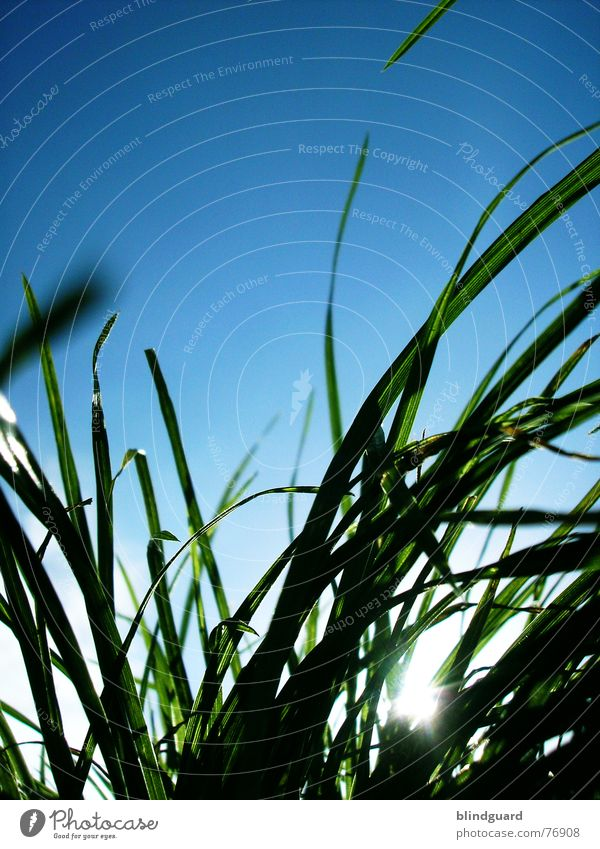 Here comes the Sensemann Grass Meadow Worm's-eye view Green White Nature Vista Sky Summer Deep Under Lawnmower Growth Wind Blue Garden Tall Sun