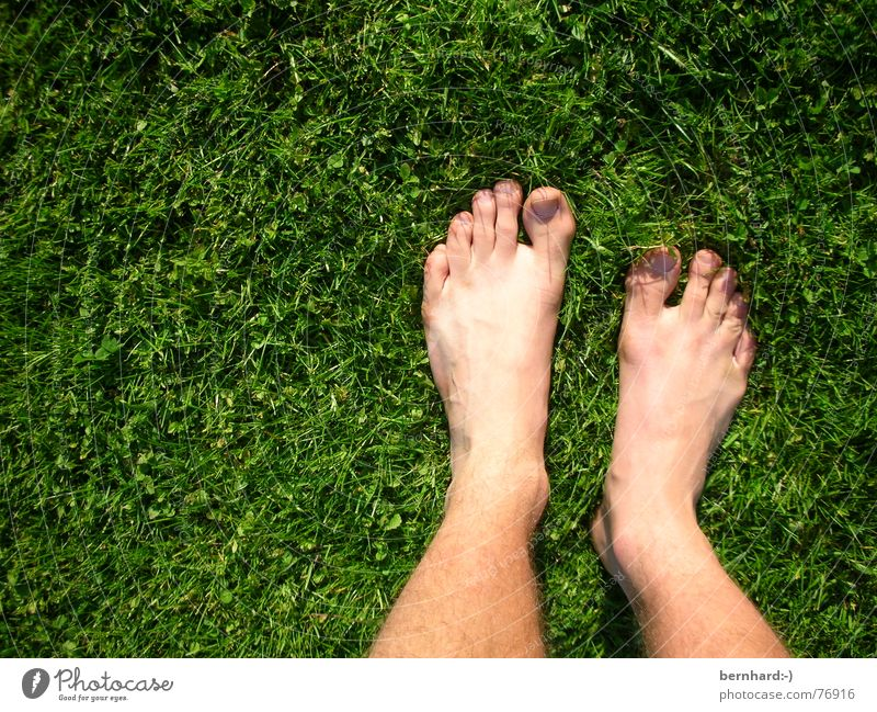 feet in green Summer Meadow Grass Toes Blade of grass Lawn Garden Nature Feet foot Parts of body Stand pure nature carpet of grass Barefoot