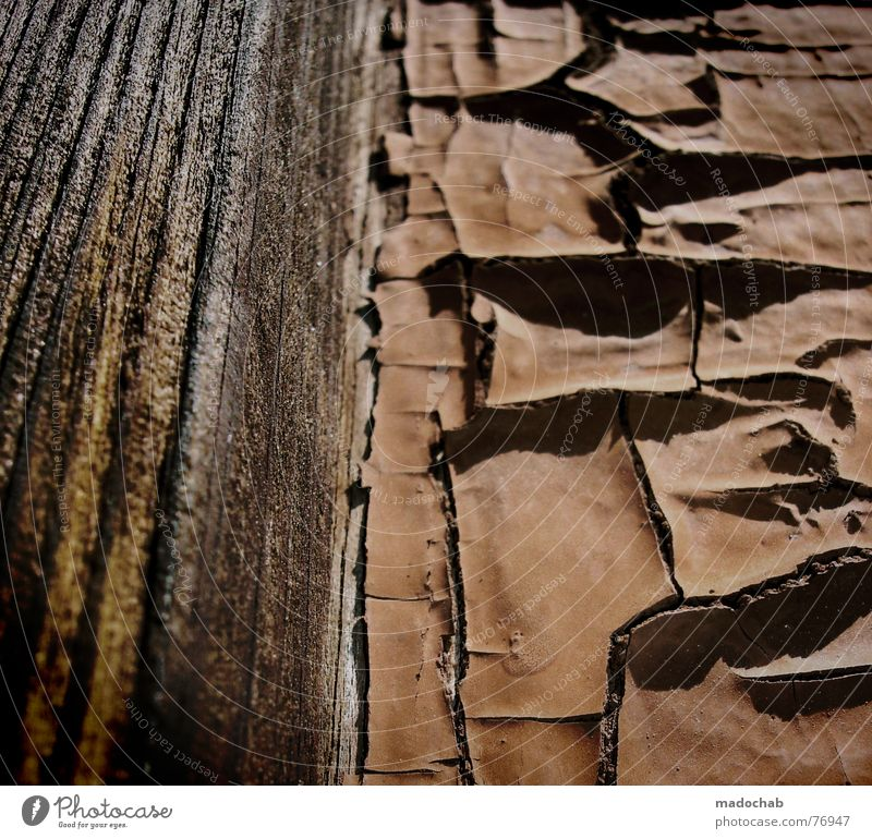 Old Pattern Beautiful Wood Stone Line Background picture Skin Stripe Transience Illustration Wrinkles Living thing Thin Material Construction