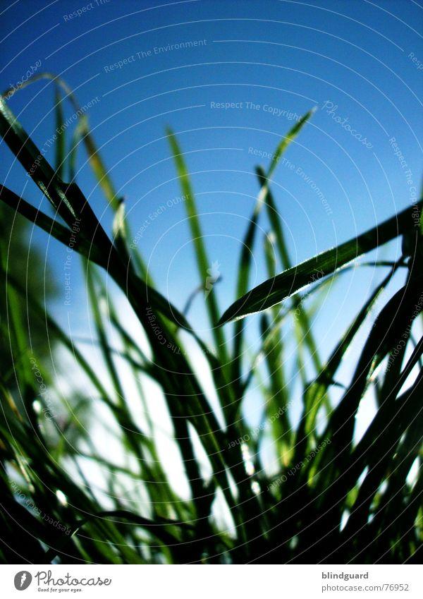 Nature Sky White Sun Green Blue Summer Meadow Grass Garden Wind Tall Growth Under Deep Vista