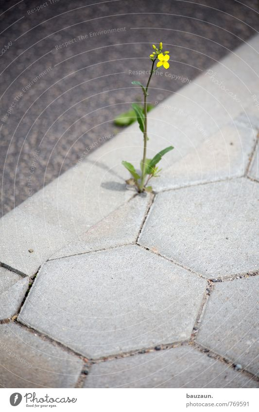 Nature Green Plant Flower Yellow Street Lanes & trails Spring Blossom Gray Natural Stone Garden Power Wild Concrete