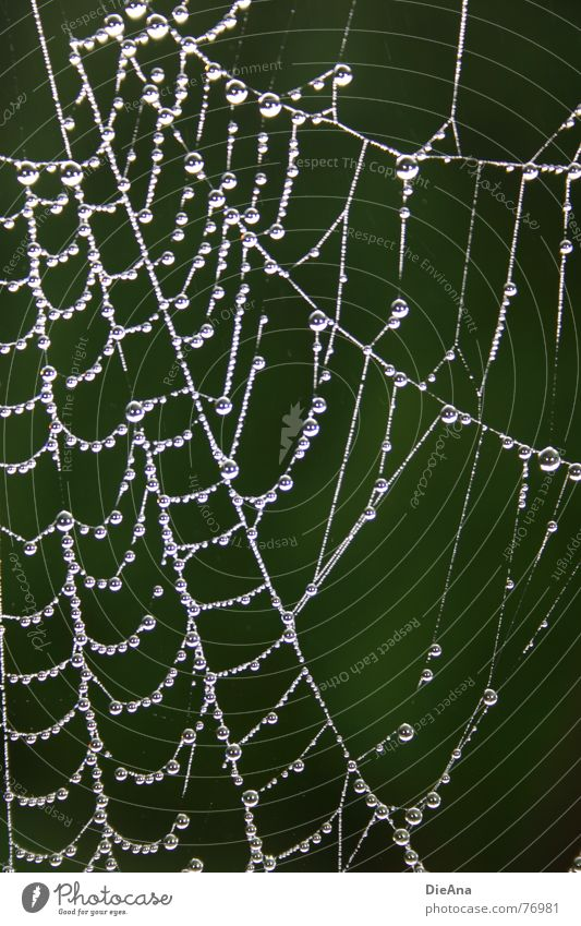 nobody at home Spider's web Pure Morning Autumn Drops of water Pattern Flat (apartment) Rent Rope Water Clarity Destruction Nature vacant