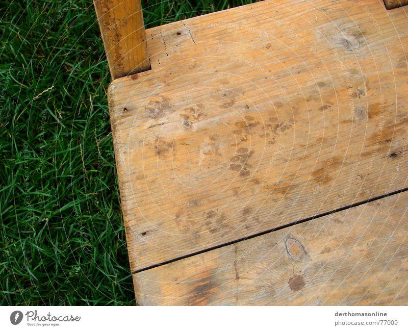Nature Old Green Colour Meadow Wood Grass Wild animal Walking Wet Fresh Chair Derelict Farm Footprint Damp