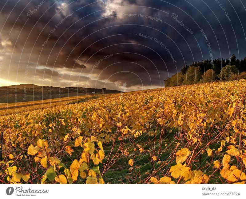Now ist´s over ... with the golden autumn Vine Kiedrich Clouds Vineyard Autumn Dark Yellow Sunset Threat Leaf Forest Slope Gold Evening Rheingau Apocalypse