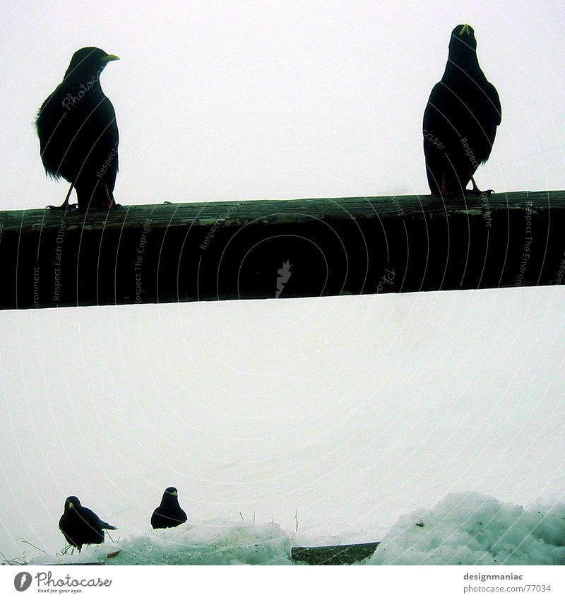 Nature White Animal Black Far-off places Dark Cold Mountain Snow Death Bright Bird Ice Fog Sit Wait